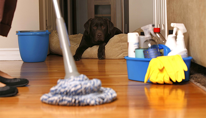 houses-cleaning